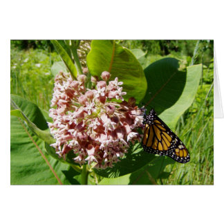 Monarch Butterfly on Milkweed Photo Greeting Card