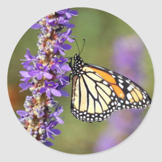 Monarch Butterfly on Pickerel Weed Classic Round Sticker