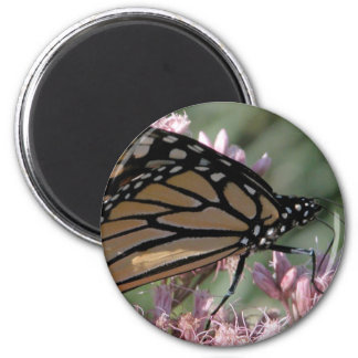 Monarch Butterfly on Pink 2 Inch Round Magnet