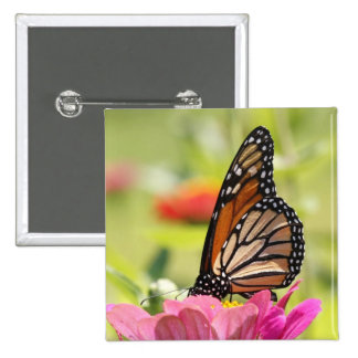 Monarch Butterfly on Pink Flower Pins