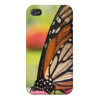 Monarch Butterfly on Pink Flower iPhone 4 Cases