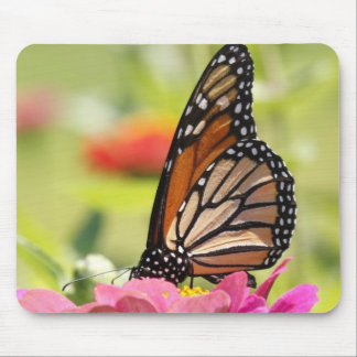 Monarch Butterfly on Pink Flower Mouse Pad