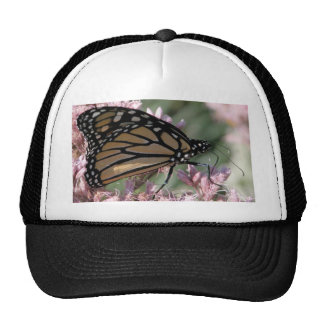 Monarch Butterfly on Pink Hat