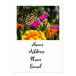 Monarch butterfly on pink marigold-business cards