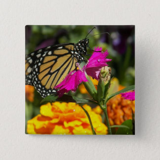 Monarch butterfly on pink marigold-button button