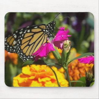 Monarch butterfly on pink marigold-mousepad mouse pad