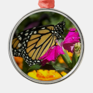 Monarch Butterfly on pink marigold-round ornament