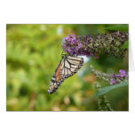Monarch Butterfly on Purple Butterfly Bush Card