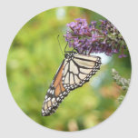 Monarch Butterfly on Purple Butterfly Bush Classic Round Sticker