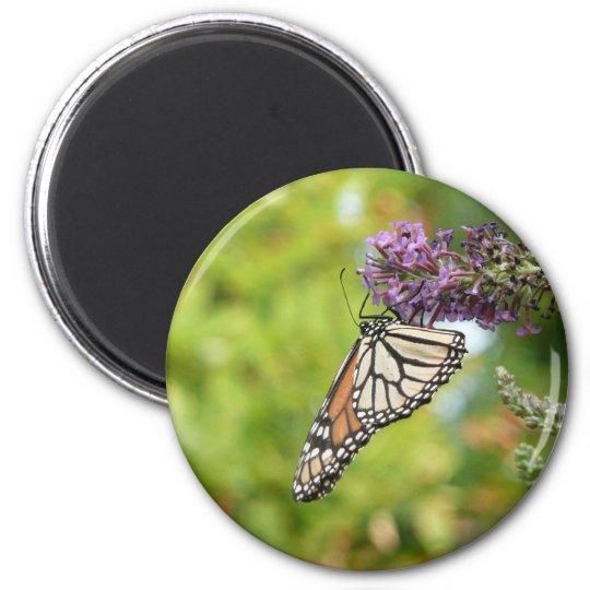 Monarch Butterfly on Purple Butterfly Bush Magnet