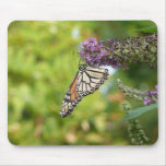 Monarch Butterfly on Purple Butterfly Bush Mouse Pad