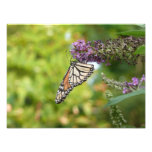 Monarch Butterfly on Purple Butterfly Bush Photo Print