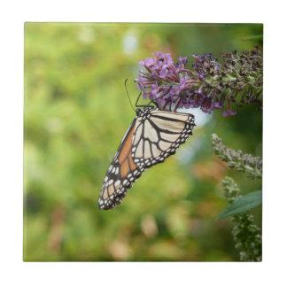 Monarch Butterfly on Purple Butterfly Bush Tile
