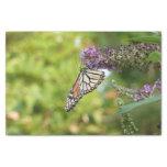 Monarch Butterfly on Purple Butterfly Bush Tissue Paper
