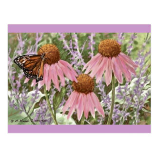 Monarch Butterfly on Purple Coneflowers Painting Postcard