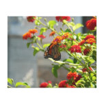 Monarch Butterfly on Red Butterfly Bush Canvas Print