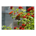 Monarch Butterfly on Red Butterfly Bush Card