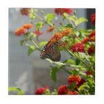 Monarch Butterfly on Red Butterfly Bush Nature Small Square Tile