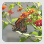 Monarch Butterfly on Red Butterfly Bush Square Sticker