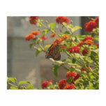 Monarch Butterfly on Red Butterfly Bush Wood Wall Art