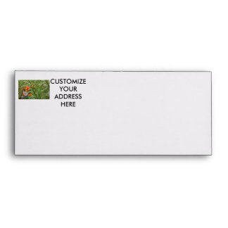 Monarch butterfly on red orange flower plant envelope