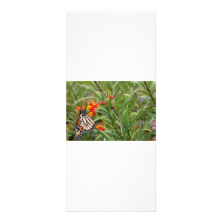 Monarch butterfly on red orange flower plant rack cards