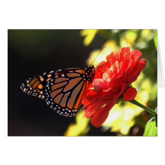 Monarch Butterfly on Red Zinnia Card