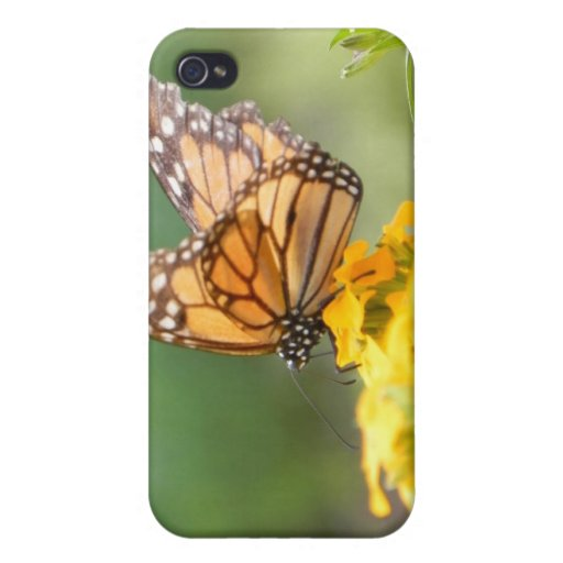 Monarch Butterfly on Siberian Wallflowers Cover For iPhone 4