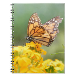 Monarch Butterfly on Siberian Wallflowers Spiral Notebook