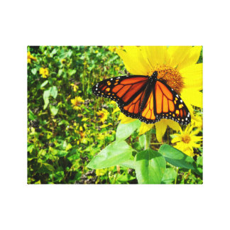 Monarch Butterfly on Sunflower Gallery Wrapped Canvas