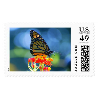 Monarch Butterfly on Tropical Milkweed Postage