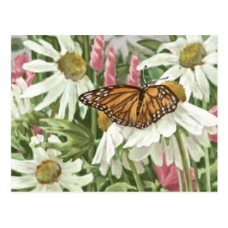 Monarch Butterfly on White Coneflowers Painting Postcard