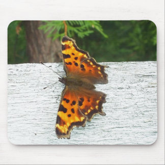 Monarch Butterfly on White Fence Mouse Pad