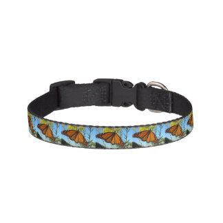 Monarch butterfly on yellow flower pretty colors pet collar
