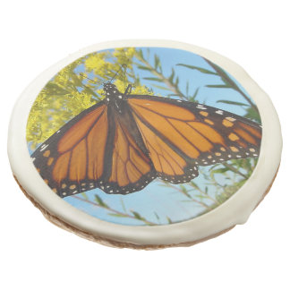 Monarch butterfly on yellow flower pretty colors sugar cookie