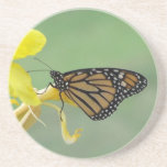 Monarch butterfly on yellow flower simple back drink coaster