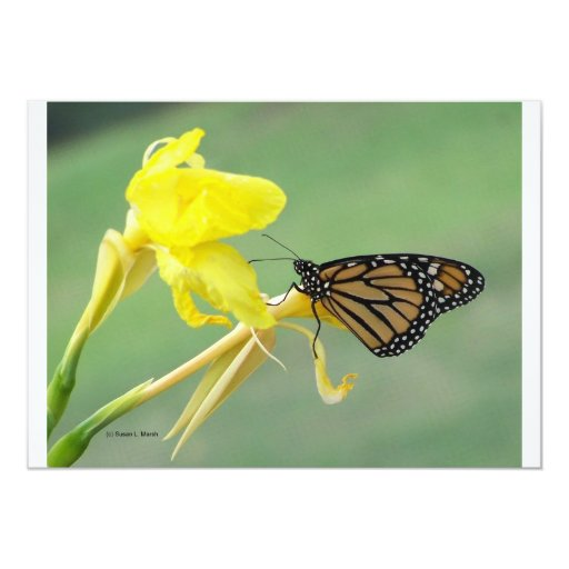 """Monarch butterfly on yellow flower simple back 5"""" x 7"""" invitation card"""