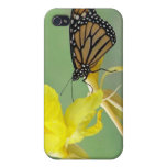 Monarch butterfly on yellow flower simple back cases for iPhone 4