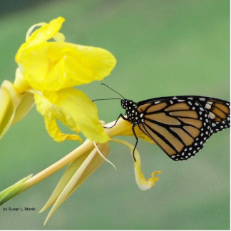 Monarch butterfly on yellow flower simple back photo sculpture keychain