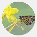 Monarch butterfly on yellow flower simple back sticker