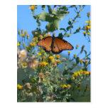 Monarch Butterfly On Yellow Wildflowers Postcard
