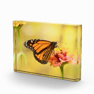 Monarch Butterfly on Zinnia Acrylic Award