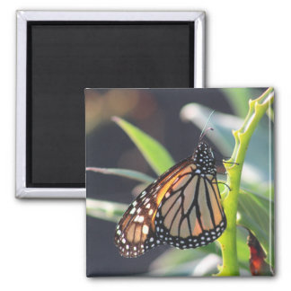 Monarch Butterfly Photo Magnet