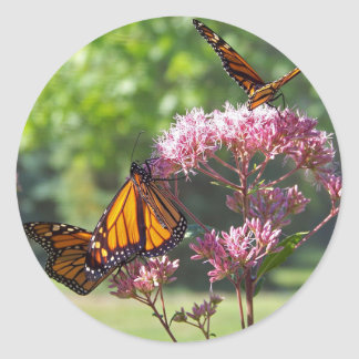 Monarch Butterfly Photographs Round Stickers