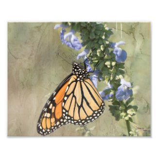 Monarch Butterfly Photography Print