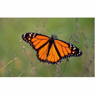 Monarch butterfly photo cutouts