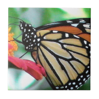 Monarch Butterfly Picture Ceramic Tile