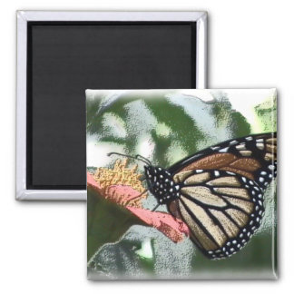Monarch Butterfly Picture Magnet