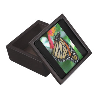 Monarch Butterfly Picture Premium Jewelry Box