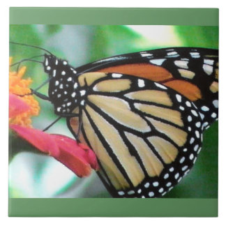 Monarch Butterfly Picture Tile